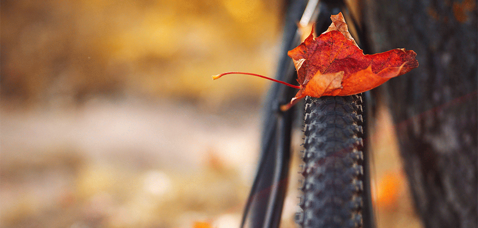 Mit dem Fahrrad sicher durch den Herbst